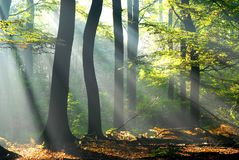 Les lumières pleuvoir à torrents par les arbres photographie stock libre de droits
