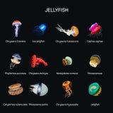 Les méduses dirigent l'ensemble dans la conception plate de style Genre différent de collection sous-marine d'icônes d'espèces de illustration stock