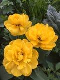 Les mésons pi jaunes Photo libre de droits