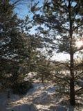 Les macro photos avec l'hiver ensoleillé de fond de paysage aménagent en parc avec des arbres et des sapins dans la neige Images stock