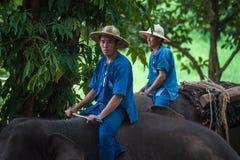 Les Mahouts montent un éléphant Photographie stock libre de droits