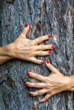 Les mains étreignent un arbre Image libre de droits