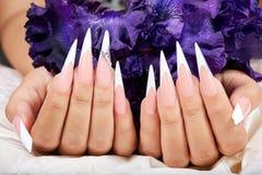 Les mains avec de longs ongles manucurés français artificiels et un iris pourpre fleurissent images libres de droits