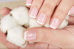 Les mains avec la manucure française tenant un coton fleurissent Photographie stock libre de droits
