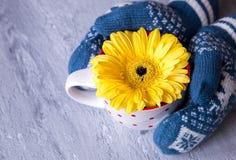 Les mains dans des mitaines tiennent une fleur de gerbera dans une tasse Photos libres de droits