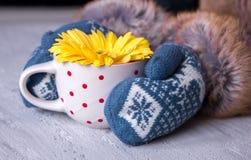 Les mains dans des mitaines tiennent une fleur de gerbera dans une tasse Photographie stock