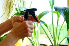 Les mains de dames âgées pulvérisant des fleurs Image stock