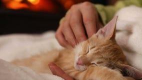 Les mains de femme choient le chaton mignon dormant dans son recouvrement clips vidéos