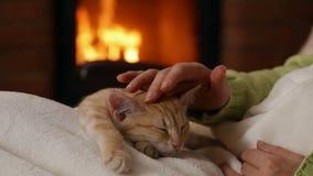 Les mains de femme choient le chaton orange mignon dormant dans son recouvrement clips vidéos