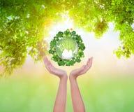 Les mains de femme jugent écologique Image stock