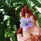 Les mains de jeunes mariées Image stock