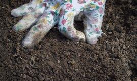 Les mains de l'aîné bel sur son jardin énorme signent délicieux Photos stock