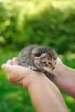 Les mains de l'aîné retenant le petit chaton Images stock