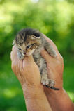 Les mains de l'aîné retenant le petit chaton Image stock