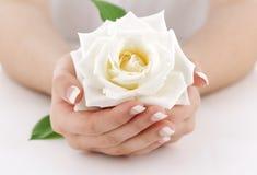 Les mains de la femme avec la rose de blanc photographie stock libre de droits