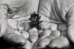 Les mains de la femme forte Photo stock