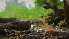 Les mains de la femme plantant les graines sur terre ont rectifié et ont arrosé avec le bruit ambiant de nature clips vidéos