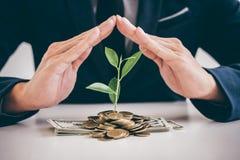 Les mains de la protection d'homme d'affaires plantent l'élevage de germination du gol Image stock