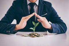 Les mains de la protection d'homme d'affaires plantent l'élevage de germination du gol Images stock