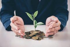 Les mains de la protection d'homme d'affaires plantent l'élevage de germination du gol Photos stock