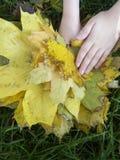 Les mains des enfants avec les feuilles jaunes Photographie stock libre de droits