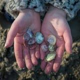 Les mains des enfants tenant des coquillages sur la plage photographie stock libre de droits