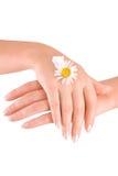 Les mains des femmes avec de la crème Images libres de droits