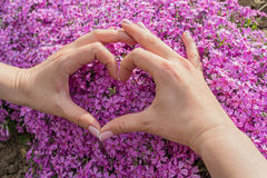 Les mains des femmes se sont pliées sous forme de coeur et fleurs Photo libre de droits