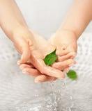 Les mains du femme avec la lame verte dans l'eau Photographie stock libre de droits