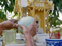 Les mains du vieil homme assidu offrant une courge de melon ou de cire d'hiver, une culture ont sélectionné de son jardin à une m image libre de droits
