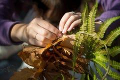 Les mains faisant la guirlande des feuilles et de la fougère d'érable, se ferment  photo stock