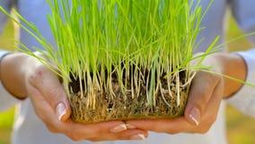 Les mains femelles donnent la poignée de sol avec l'herbe verte Concept de croissance, soin, durabilité, protégeant la terre banque de vidéos