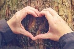 Les mains femelles faisant des gestes le coeur se connectent le tronc d'arbre, concept d'écologie Photographie stock