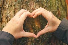 Les mains femelles faisant des gestes le coeur se connectent le tronc d'arbre, concept d'écologie Photos stock