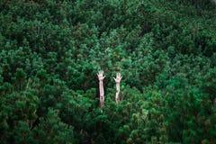 Les mains femelles montent et s'étendent au-dessus des pins verts Photographie stock libre de droits