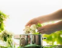 Les mains femelles préparent des fleurs de sureau Préparation plus ancienne saine de fleurs sur la table avec faire cuire le pot  photos libres de droits