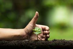 Les mains protègent des arbres, les arbres d'usine, mains sur des arbres, nature d'amour Image libre de droits