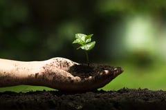 Les mains protègent des arbres, les arbres d'usine, mains sur des arbres, nature d'amour Photos libres de droits