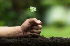 Les mains protègent des arbres, les arbres d'usine, mains sur des arbres, nature d'amour Photo libre de droits