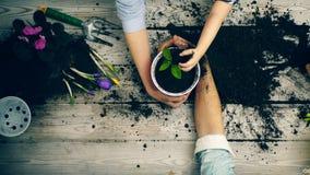 Les mains se ferment vers le haut des fleurs d'usine dans des pots Le concept du jardinage Yin Yang clips vidéos