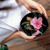 Les mains tiennent une cuvette de fleurs Images stock