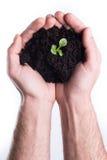 Les mains tient le terrain végétal avec l'usine images libres de droits