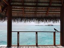 Les Maldives donnant sur l'île Photographie stock