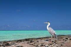 Les Maldives et l'oiseau images stock