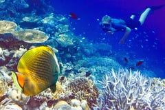 Les Maldives. Le plongeur à l'océan et aux poissons tropicaux i image stock