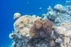 Les Maldives naviguant au schnorchel Photo libre de droits