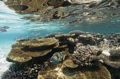 Les Maldives - récif coralien Image stock