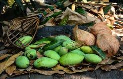 Les mangues vertes avec le fruit-pickeron et les noix de coco à long manche sèchent des feuilles Photos stock