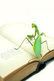 Les mantes vertes sur un vieux livre, se ferment, foyer sélectif Mantodea Photographie stock libre de droits