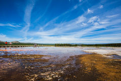 Marécages en parc de yellowstone Photo stock